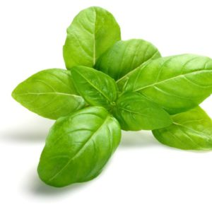 Aaron Tait Photography fresh basil