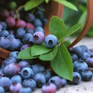 preview-full-how-to-grow-blueberries-20150416163651-q75,dx800y-u1r1g0,c--