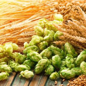 barley, green hops, beer ingredient
