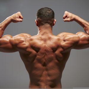 back, triceps, biceps, scapular